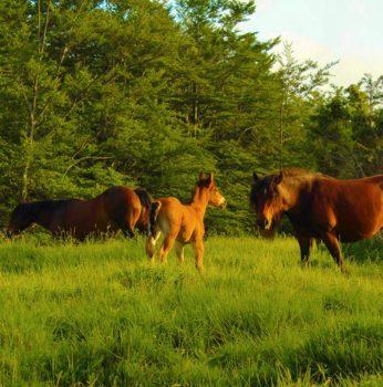 Cavalli selvatici