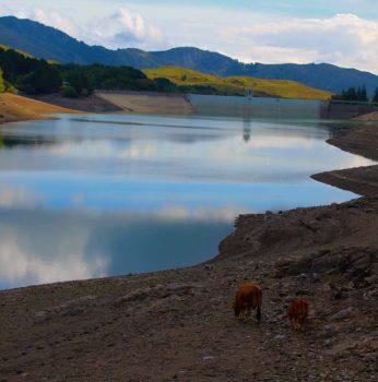 laghi giacopiane 2 + mucche copia